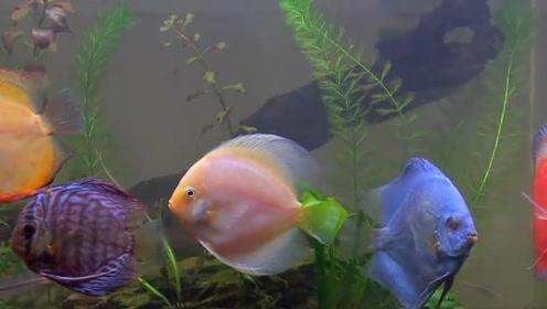 好看的鱼千千万,只有它被称为神仙鱼