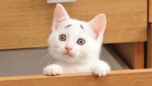 """最""""喜感""""的流浪猫,天生八字眉意外走红网络,完美逆袭"""