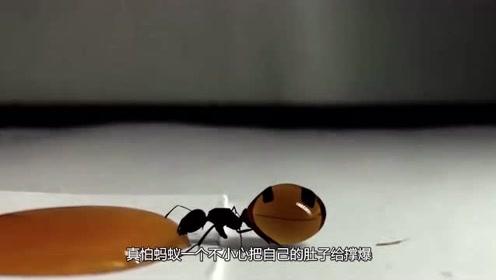 蚂蚁填不饱的肚子到底有多大?老外用果汁测试,网友:我没看错吧