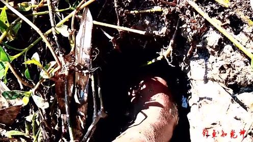 发现鱼洞就是一顿掏,必须一锅端了!