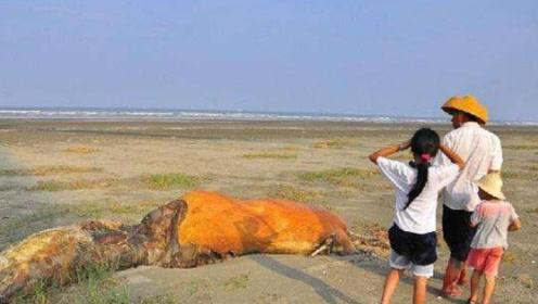 在沙漠中,渴死的骆驼为什么不能碰?小伙伴们要小心