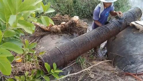 路边的水口,长长的竹笼,一天一收!