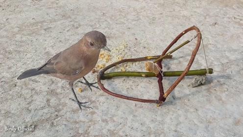 牛人制作捕鸟器,小鸟只要一靠近,网友:等着进大锅游泳吧!