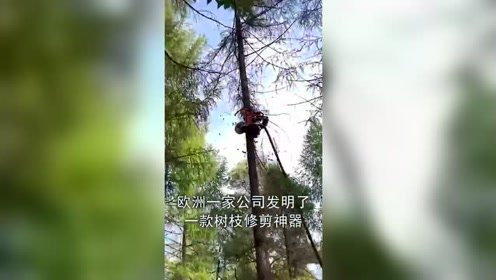 修剪树枝神器,60秒搞定一棵树