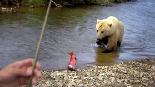 钓鱼见过,你见过钓熊吗?这才是牛人!