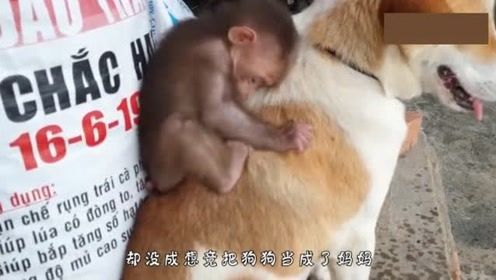 小猴子突然抱住狗狗不撒手,背后原因是这样的!