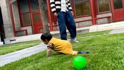 """张歆艺晒娃""""摊地气"""",8个月萌娃草地爬行动作超可爱"""