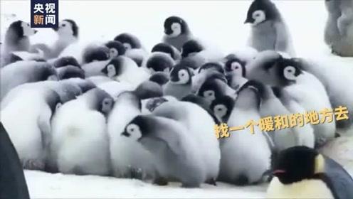 小企鹅上幼儿园都经历了些什么?快点进来看看吧