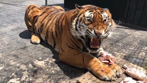 古代有武松,现代有泰森,人类真的可能空手打死老虎?