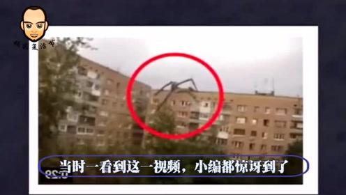 男子拍到巨型蜘蛛,在2栋房子墙壁爬行,网友大呼:骗子