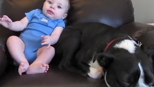 狗子和宝宝在沙发上,宝宝突然放屁,网友:狗子的反应我能笑一年