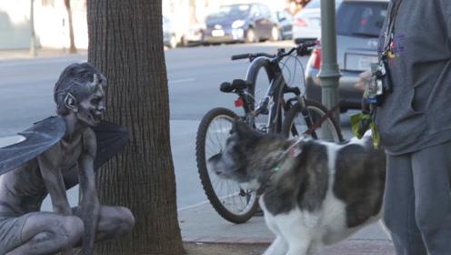 """女子出门遛狗,发现一只""""恶魔""""蹲坐街头,下一秒画风突变!"""