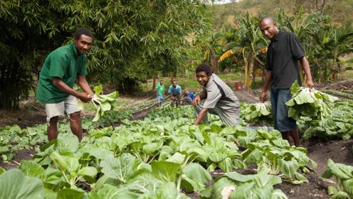 非洲人:我们的土地种不了蔬菜,中国人来之后,让他们心服口服!
