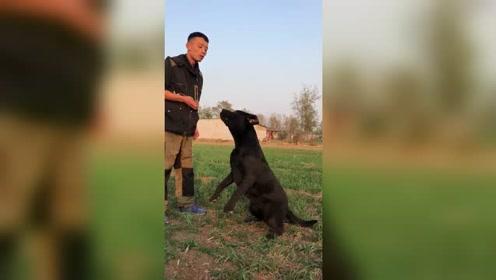 别说狗狗不听话,训练方法才是关键,这狗聪明又听话
