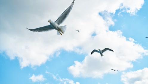 【生物大师 高中】蛋白质——鸟类的羽毛