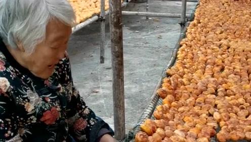太行山牛盘柿饼加工,这场面你见过吗,一眼就看见满园的柿子饼!
