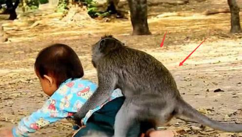 猴子照顾一岁小孩,拦腰抱起脑袋着地,吓坏旁观者