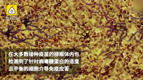 美国新型四价疫苗可抵御埃博拉等四种最致命出血热病毒