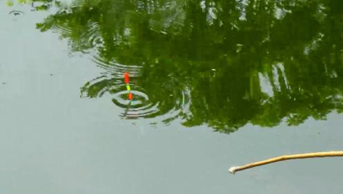 钓鱼:在鱼塘里随便玩玩