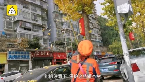 环卫大姐持竿打秃银杏树:叶子老掉难扫,1次打光扫完省事