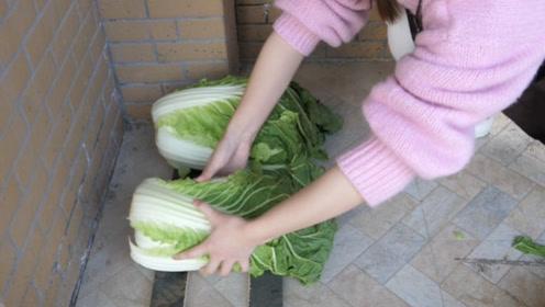白菜干瘪腐烂难保存,教你个土方法,新鲜翠绿,吃到明年不会变坏