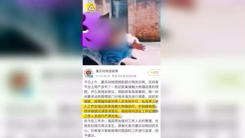 疑熊猫馆员工私自带人摸熊猫幼崽,动物园回应:正处理