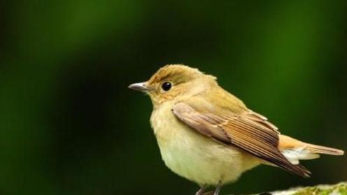鸟的寿命很短,为什么见不到死去的鸟?今天终于明白了