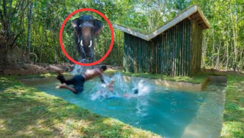 牛人在森林里,徒手打造泳池豪宅,最后竟吸引来大象!