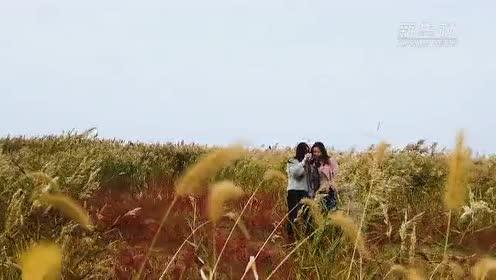 江苏射阳:来这里 看火红一片的盐蒿滩