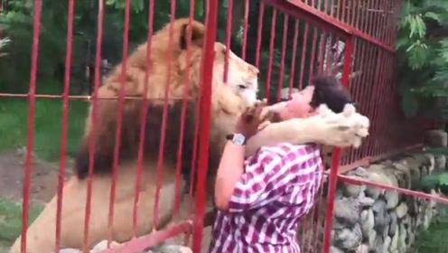 女子隔着铁门挑逗狮子,不料狮子一手抱住女子,结果会怎样