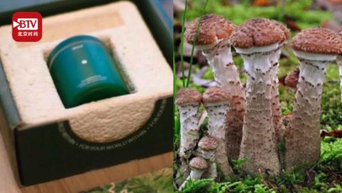 蘑菇可取代塑料并做建筑材料 美国研发者:终极目标是做人体器官!