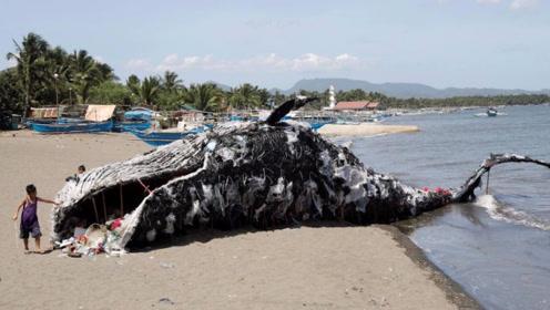 为什么搁浅的鲸鱼千万不能靠近?小伙不信邪,镜头记录瞬间!