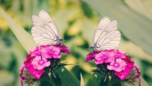 【科学嬉游记】生命——青蛙和蝴蝶如何生长
