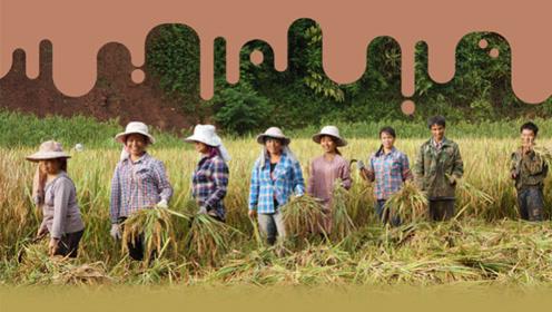 减贫寻道 · 云南省河边村打造复合型产业脱贫新机制