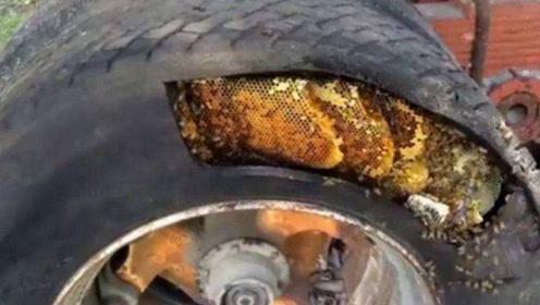 男子听到自家车胎有嗡嗡声,用刀割开一看,金灿灿的非常诱人!