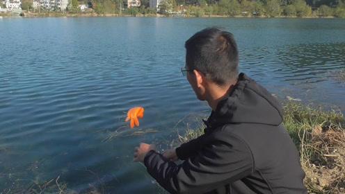 对于有灵性的鱼来说,放生是最好的选择