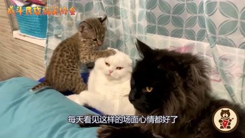 主人带回来一只猞猁宝宝,可把母猫稀罕坏了,网友:这是当成亲生的了