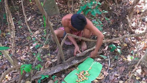 大叔野外油煎椰子虫,看他吃的津津有味,我也忍不住开始咽口水了