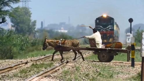 火车到了眼前,印度大叔慢悠悠赶着毛驴过铁路,还狠抽了一鞭子