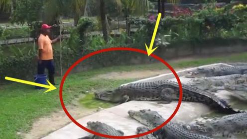 饲养员给鳄鱼喂食,不料直接被鳄鱼盯上了,下一秒别眨眼!