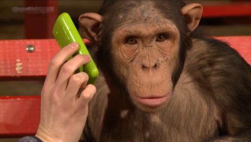 猴子智商有多高?主人为逗猴子做出一个举动,下一秒笑出腹肌!