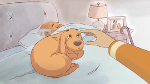 狗狗的主人突然去世,新的家庭收养了它,它却不适应新家