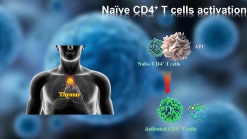 日本最新研究:超长寿者血液携带特殊T细胞,可预防免疫性衰老