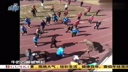 """梅州:学校正在开运动会,一头水牛闯入与学生""""赛跑 """""""