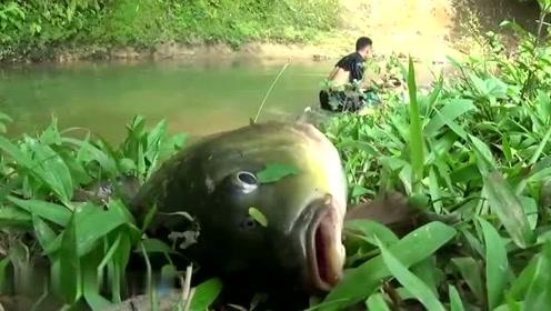 小伙自制抓鱼工具,跟媳妇一起在野河抓野鱼