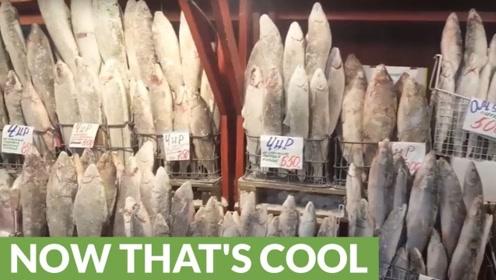 零下60度被冻得硬邦邦的鱼,看看雅库特人是怎么吃的?