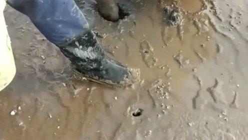 这样的洞怼一怼就会有皮皮虾,来自老渔民的经验,真是涨姿势了!
