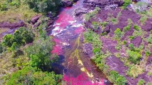 哥伦比亚的神奇河流,一年四季变换出不同的颜色,禁止化妆者进入