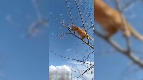 乡下的猫有多猛,现在还有这门手艺的猫不多了,网友:太厉害了