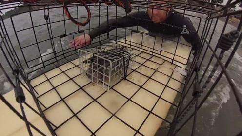 男子用铁笼子做陷阱,螃蟹拼了老命往里钻,网友:我也试试!